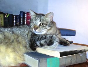 Pixel lectures on Talmud
