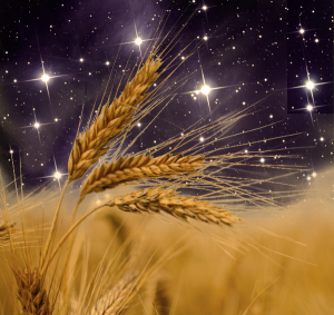 The Elul harvest