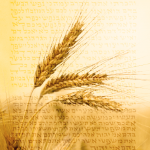 Counting the Omer: A lesson in Jewish political dynamics