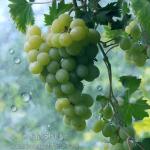 Massechet Ta'anit: Do we still need to pray for rain?