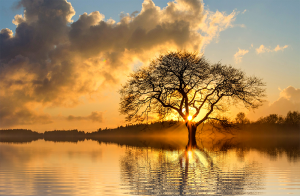 Tu b'Shvat: A Tree planted in Hope